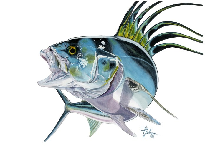 roosterfish 5x7
