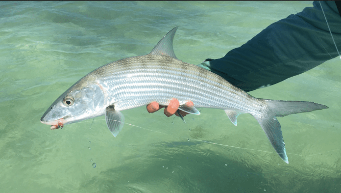 bonefish belize