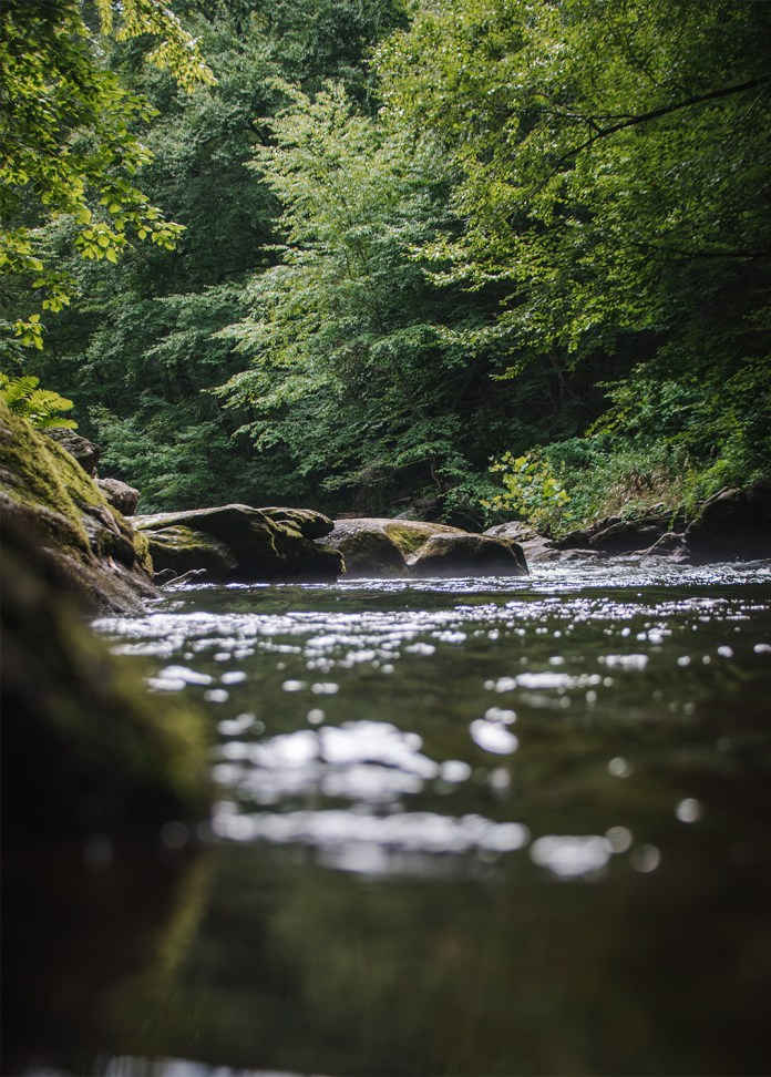 Arriving to a undisturbed trout stream early in the morning