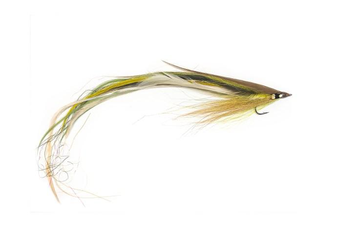 American eel fly