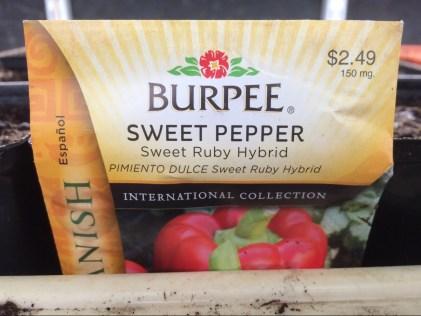 Sweet Pepper Sweet Ruby Hybrid