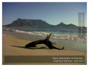 Table Mountain Driftwood