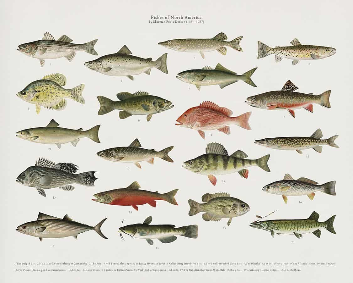 Fishys Favorites for Bass, Trout, and Salt Water