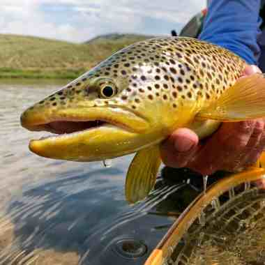 Fly Fishing in Summer Flows