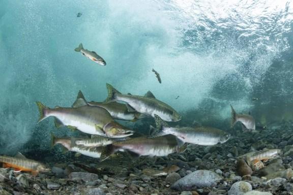 Fly fishing Alaska on a budget