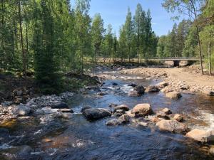 Taimen nähty Mämmenkoskessa! – iso urakka kalatiellä valmistuu
