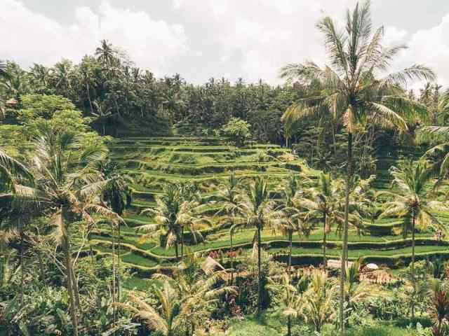 The ultimate Bali Itinerary for 2 weeks – the perfect guide for first time visitors. Featuring many tips and things to do and places to eat in Seminyak, Canggu, Ubud, Uluwatu, Nusa Dua and Sanur. This Bali travel guide lists some great shopping spots, beaches, beach clubs, waterfalls, food, cafes, restaurants, accommodation, markets, temples and more.