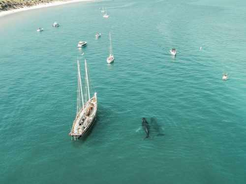 While visiting Brisbane, Australia, be sure to plan a day trip to Moreton Island to visit the amazing Tangalooma Shipwrecks. Go snorkeling or diving, feed dolphins and stay at Tangalooma Island Resort or go camping on the beaches. #Tangalooma #Brisbane #Australia MoretonIsland