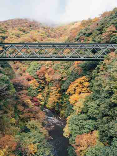 A train bridge over a river and Autumn trees in japan