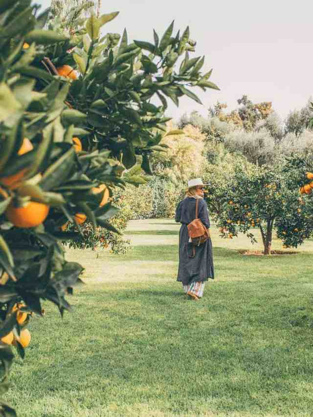 Frolicking in the orange groves of La Mamounia Hotel in Marrakech, Morocco.