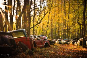 morning in the junk yard