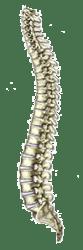 Spine Examination