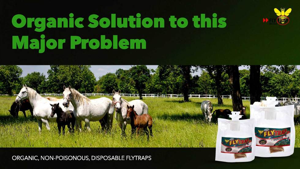 Organic Solution to Housefly Blowfly Filth fly