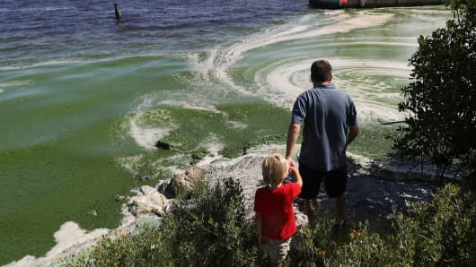 A father shows his son the awful smelling algae hugging the shoreline of the St. Lucie River on July 11, 2016 in Stuart, Florida.
