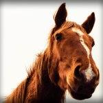 野次馬の意味とその由来。馬社会も色々。馬には馬の悩みがあるのか。