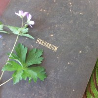 Making a Herbarium: Pages and Labels