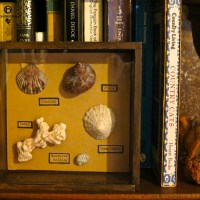 Sea Shell Shadow Boxes