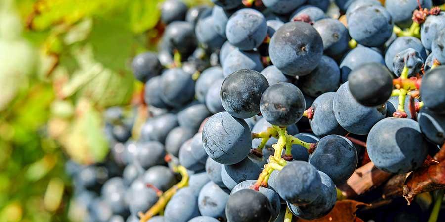 Fruits of Our Faith