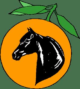 Citrus Cup Regional Morgan Horse Show