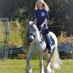 Waypoint Carriage Ponies
