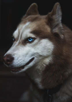 Even nice dogs can bite people