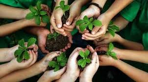 Image result for tu bishvat 7 species