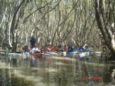 Mangrove photo