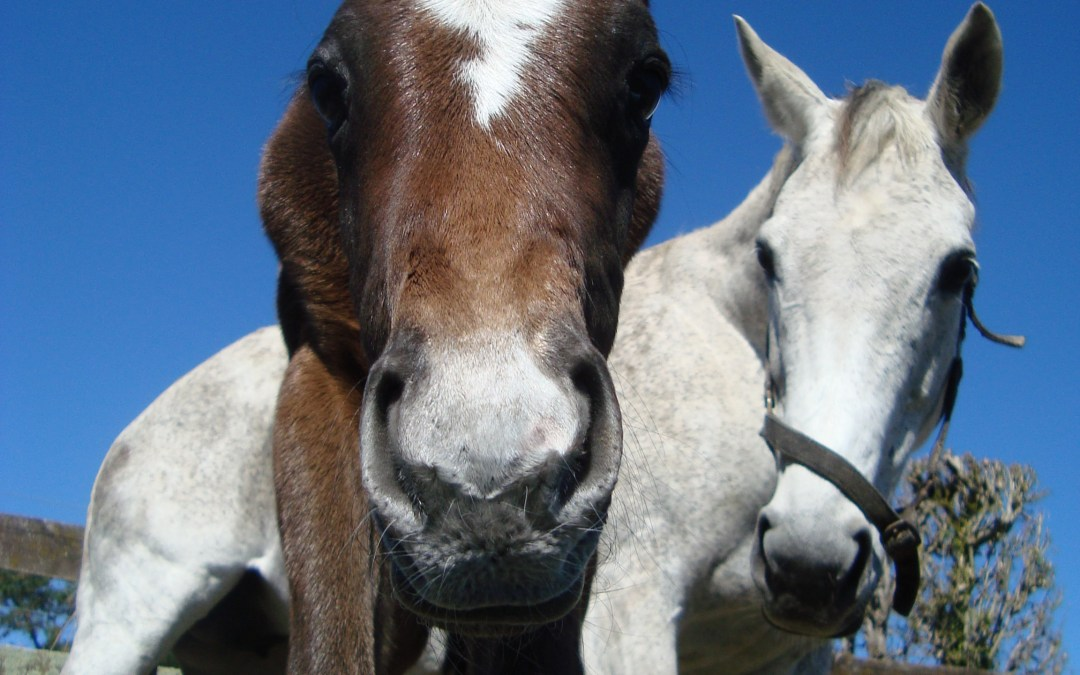 Foaling Maiden Mares: Part 2 of 2
