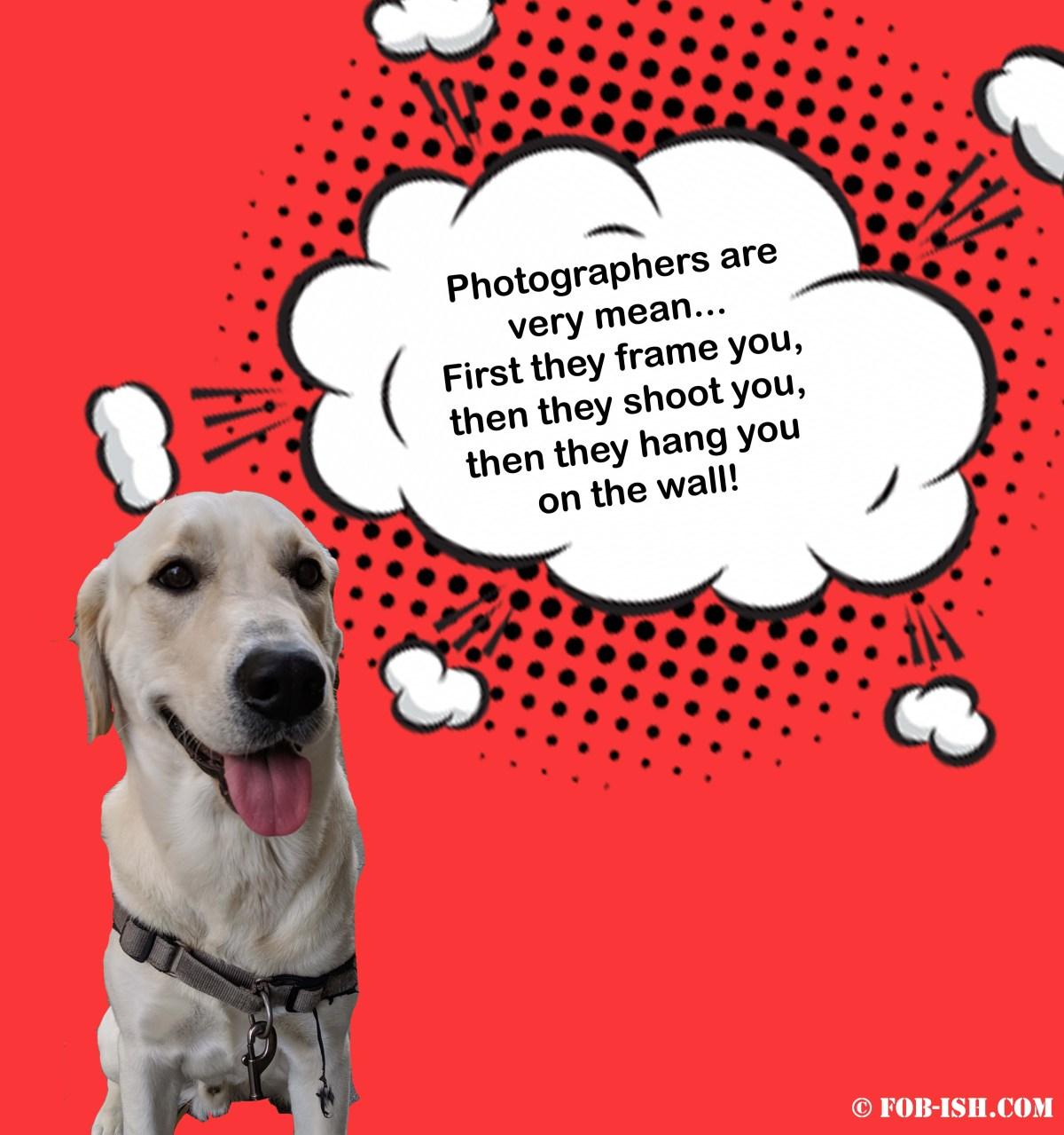 Dog saying something funny about street photography
