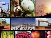 La diversificación productiva y el empleo