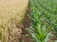 Cambio Climático y sus Efectos Sobre el Sector Agrícola en Colombia