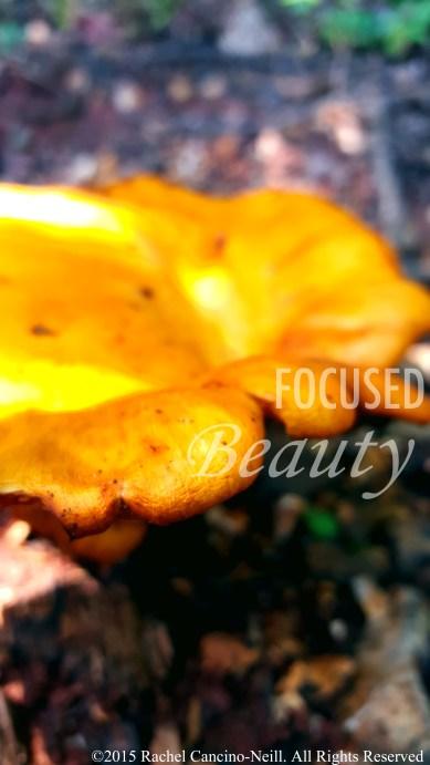 """""""Micro Mushroom 3"""" taken by Rachel Cancino-Neill in Erbie, Arkansas: 2015"""