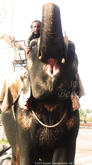"""""""Elephant Ride"""" by Rachel Cancino-Neill taken in India:2010"""