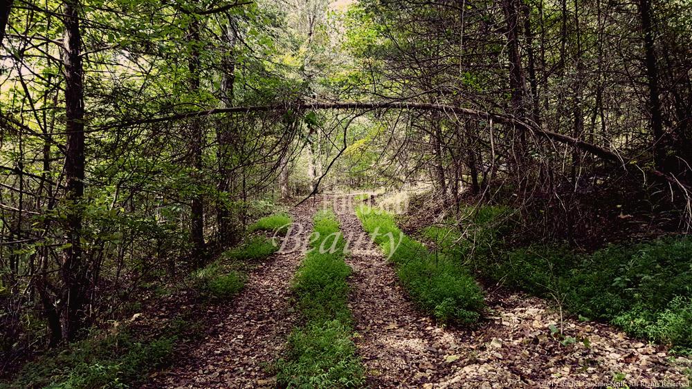 """""""Overarching"""" by Rachel Cancino-Neill taken in Erbie, Arkansas: 2015"""
