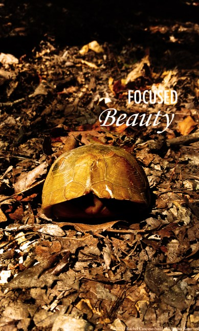 """""""Turtle"""" by Rachel Cancino-Neill taken at Roaring River State Park"""