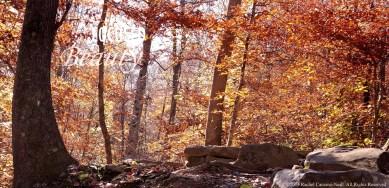 """""""Fall in the Ozarks"""" by Rachel Cancino-Neill taken on Buffalo River Trail, AR: 2015"""