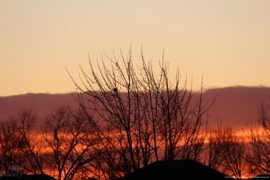 """Royal Morning 3"" by Rachel Cancino-Neill"