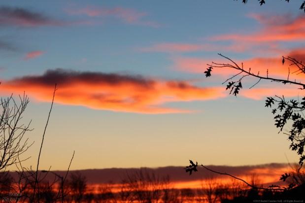 """Royal Morning 6"" by Rachel Cancino-Neill"
