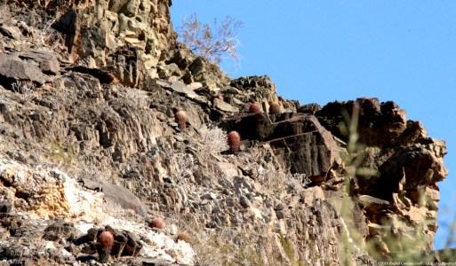 Rocks and Cacti