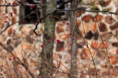 Berries at an Abandonment