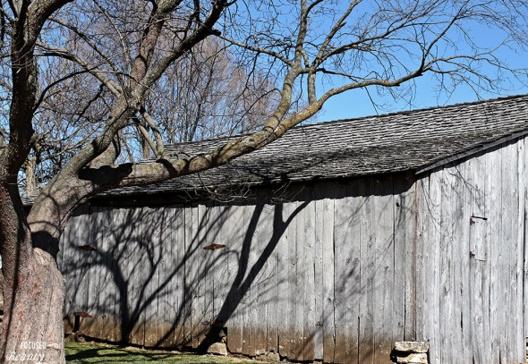 Tree casting shadow on barn