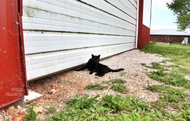 Farming cat
