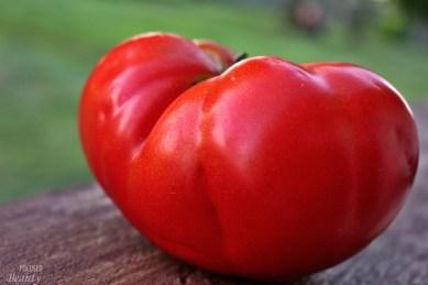 Heirloom Tomato 4