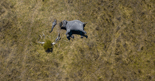 Disturbing Photo Shows Elephant Hacked Apart With Chainsaws by Hunters