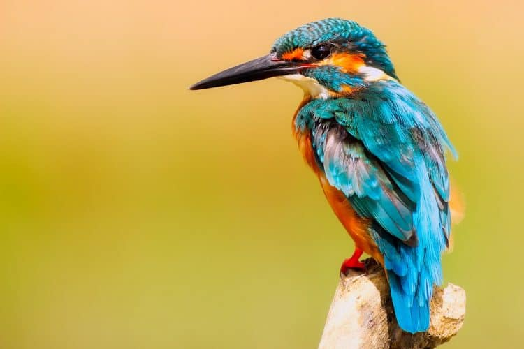 What Wildlife Can You See In London?