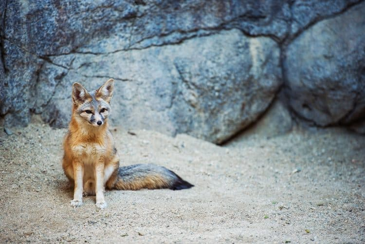 """POLL: Should """"wildlife-killing"""" pesticides be strictly regulated?"""