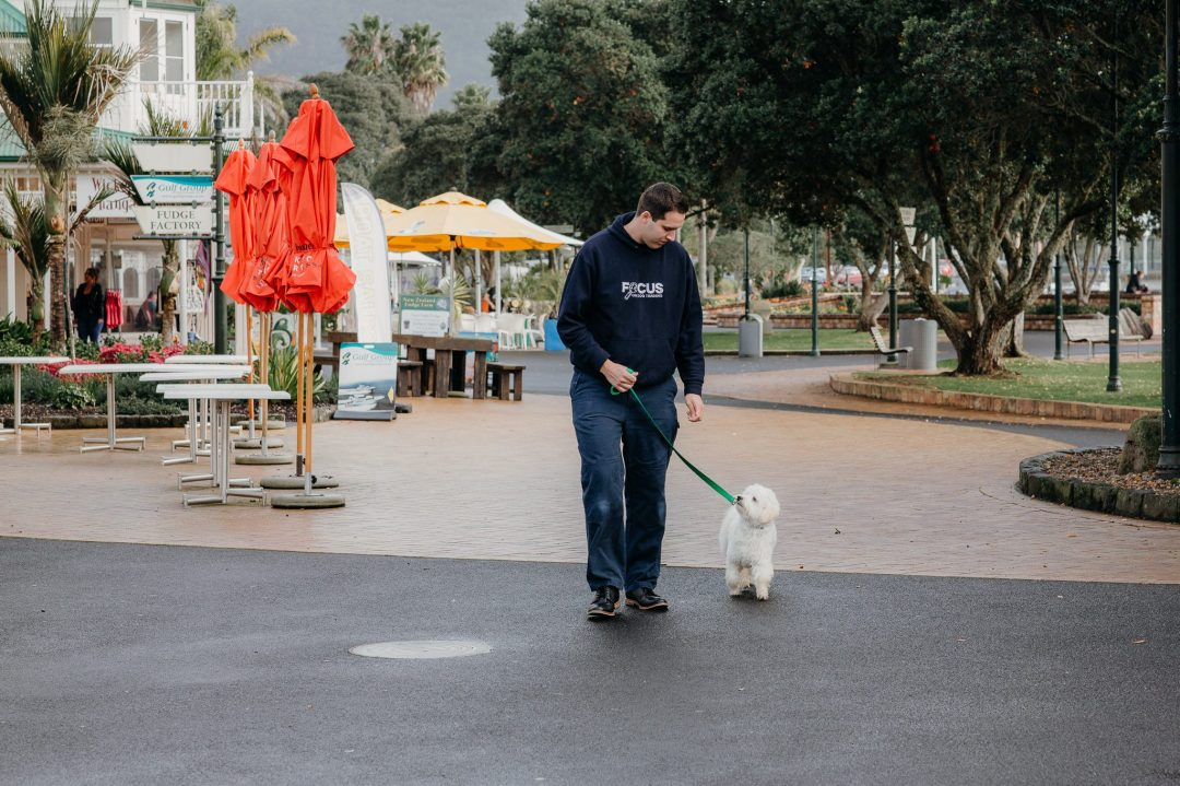 In-home dog trainer with large dog