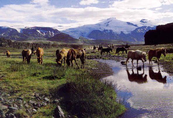 Northern Lights Iceland June