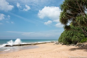 The beach where turtles come to lay their eggs 30-40 years after being born here.