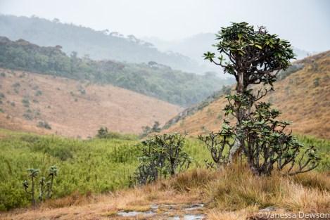 Horton Plains, Sri Lanka